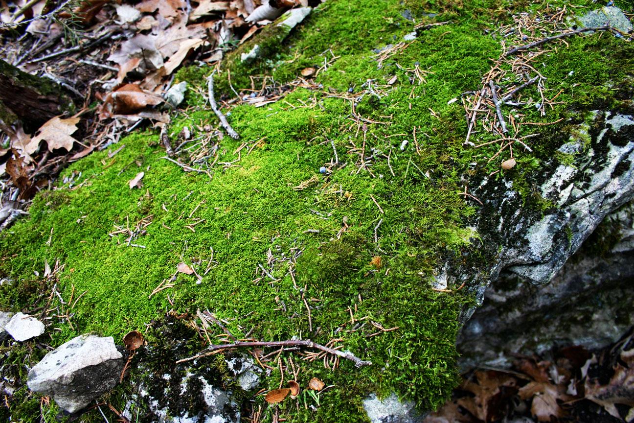 Breadtray Mountain Moss