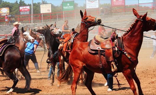 Missouri Mules